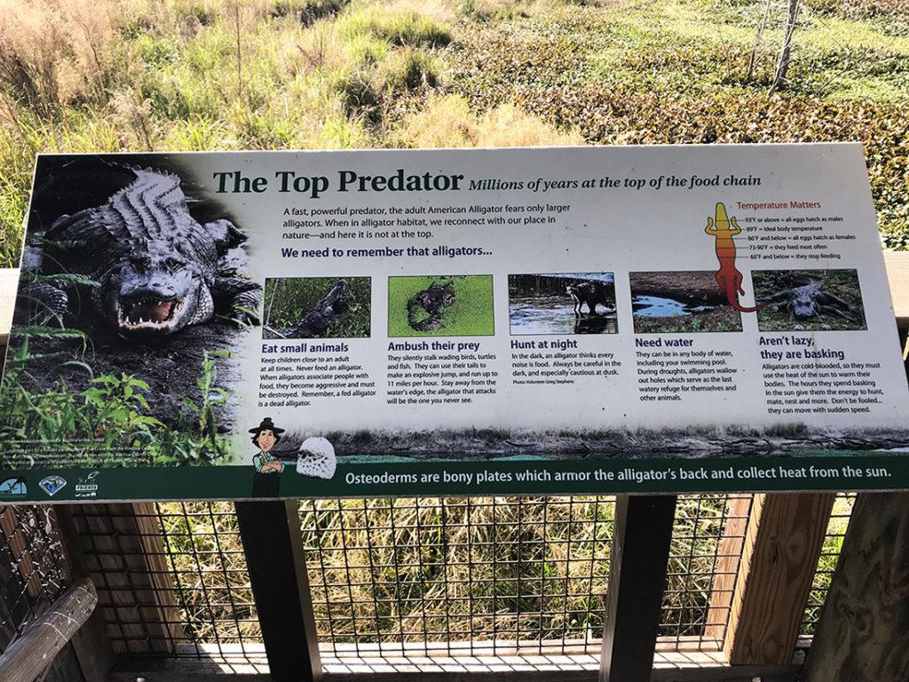 Sign describing the top predator - Alligators