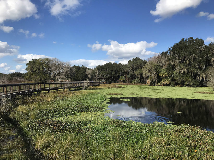 Alachua Sink Boardwalk in Paynes Prairie, Florida