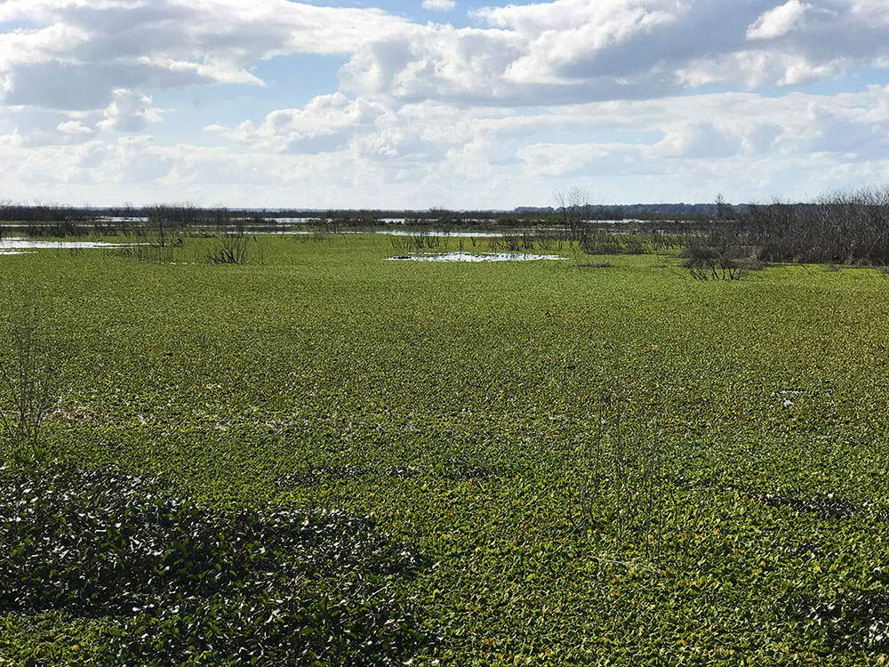 Overview of Alachua Sink in Paynes Prairie, Florida
