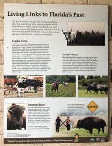 A sign explaining - Living Links to Florida's Past - cracker cattle and horses and American bison.