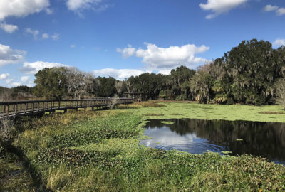 Alachua Sink Boardwalk in Paynes Prairie, Florida